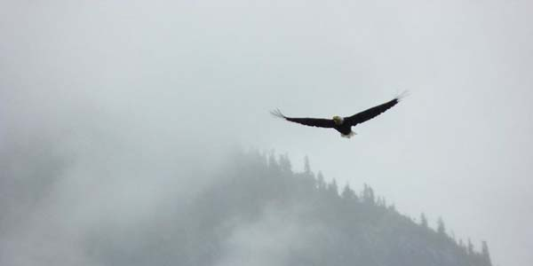 Eagle soaring in the mist