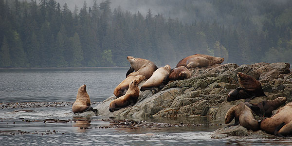 Sea Lions on the rocks