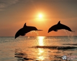 dolphinesnew_n