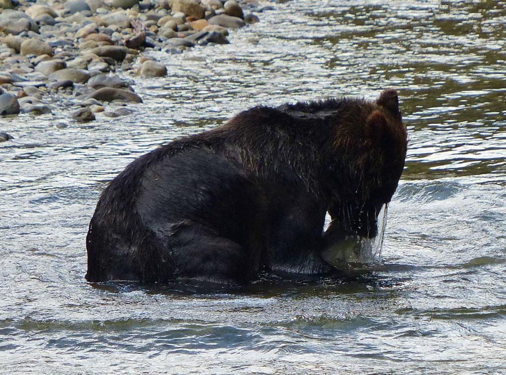 Grizzlyfeast-(1)